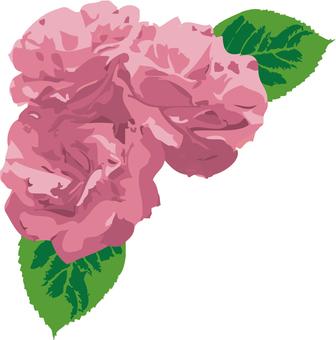 핑크 장미 2