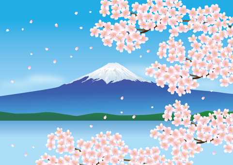 Fuji and cherry blossoms