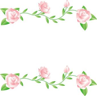 Rose of pink