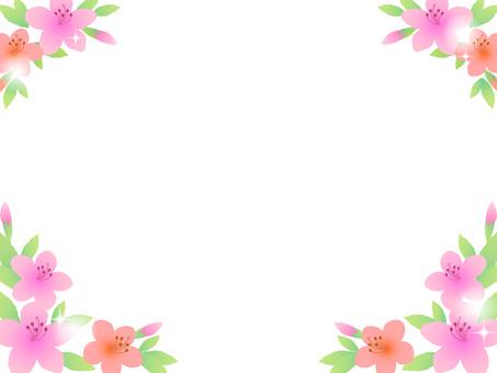 70415,杜鵑花,第2幀