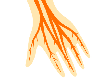 Peripheral nerve in hand