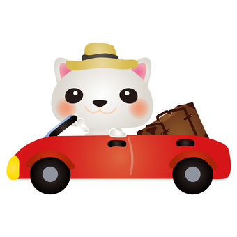 Travel with white cat