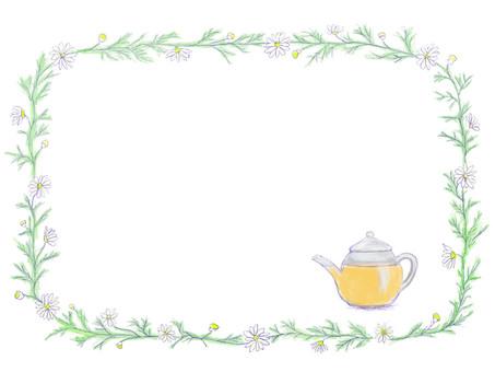 花觀賞洋甘菊/香草茶