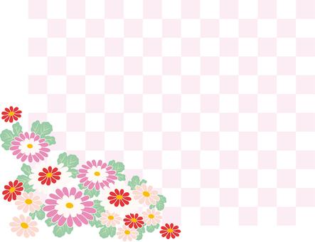 Chrysanthemum and checkered