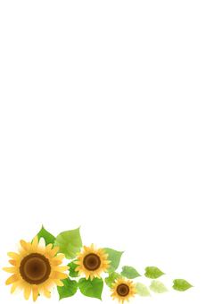 Sunflower 92