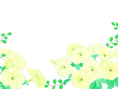 Petunia lower background white