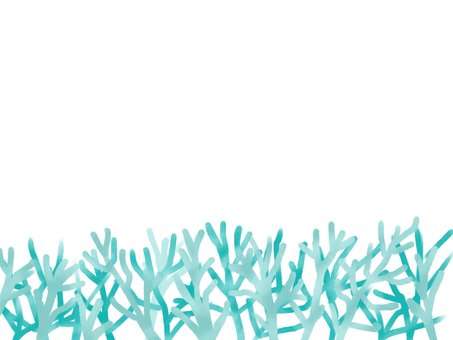 Reef of white chrysanthemum