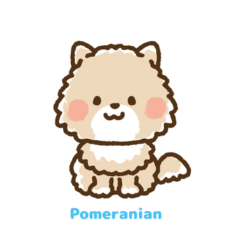 Front of Pomeranian