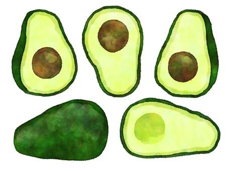 Watercolor style avocado
