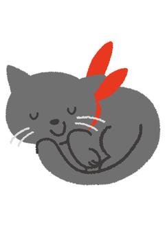 자지있는 검은 고양이