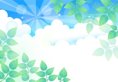 Background blue sky leaves