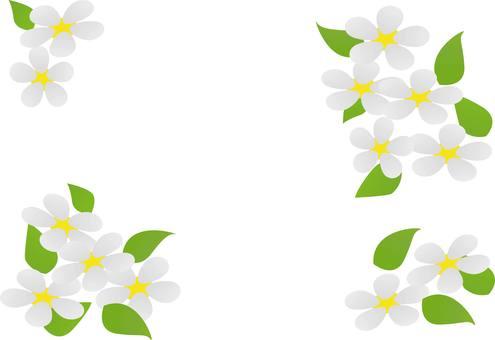 Flower petals