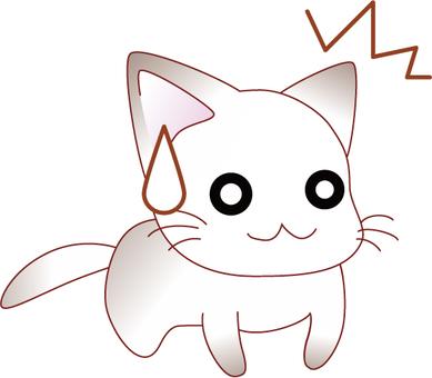 Amazing kitten