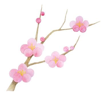 Plum blossoms ★ 0295-F