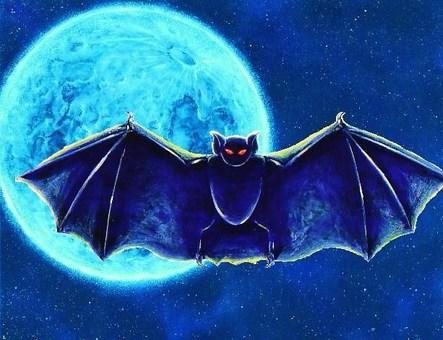 蝙蝠和月亮11
