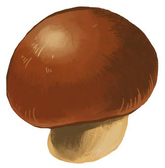 Mushroom 08 Cute
