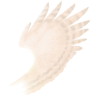 Feather (white background)