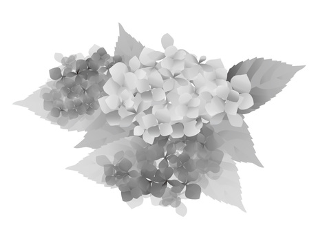 Hydrangea 02 monochrome ver.