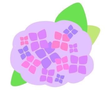 紫陽花(紫)