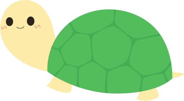 Turtle _ turtle