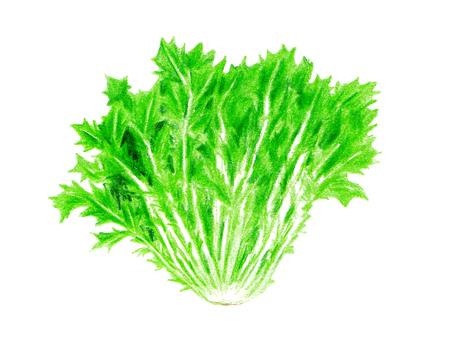 京水菜(色鉛筆画)