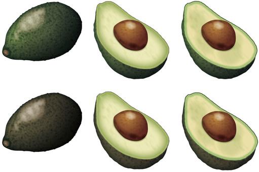 Avocado 1 / Fruit