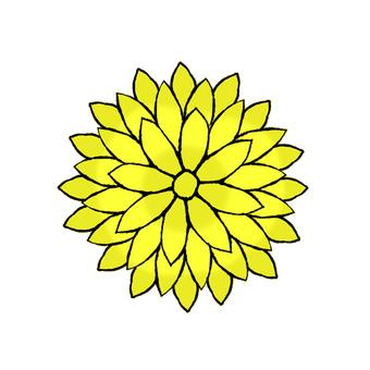 黃色的花朵