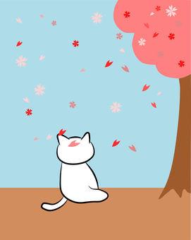 Nyanko's cherry-blossom viewing