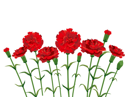 Mother's Day Carnation Bunch Simple