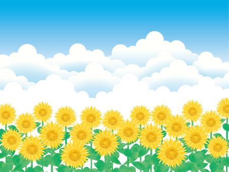 Summer sky-9