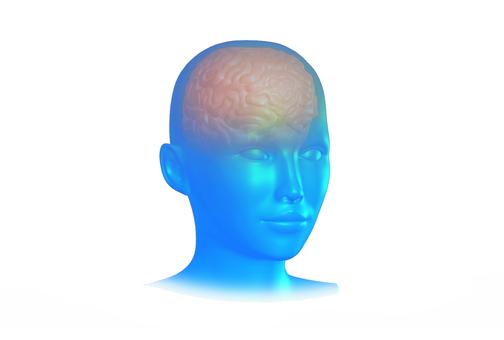 뇌의 CG 이미지 _002