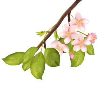 Spring · Sakura · Sakura 08