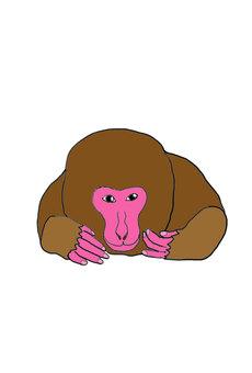 원숭이 눈을 치켜 뜨고