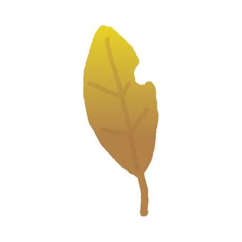 Fallen leaves _ worm-eaters