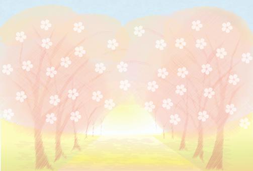 벚꽃의 아치 ~ 온화 ~