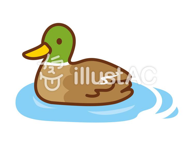 泳ぐカモのイラストイラスト No 1289205無料イラストならイラストac