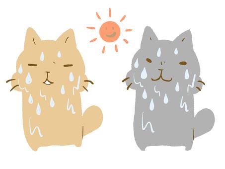 열사병 고양이