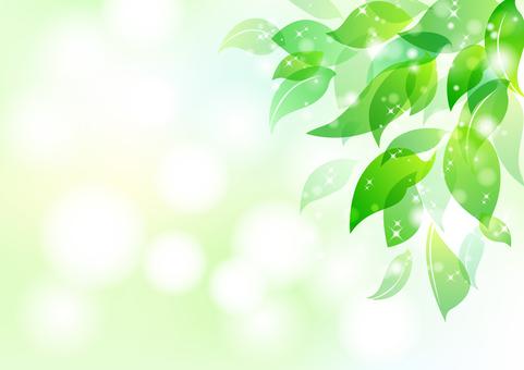 Fresh green material 5