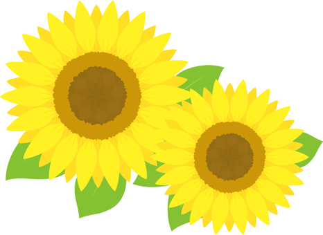 Sunflower _ 2