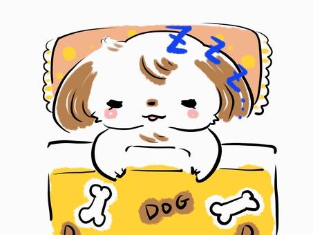 Shih tzu dog sleep