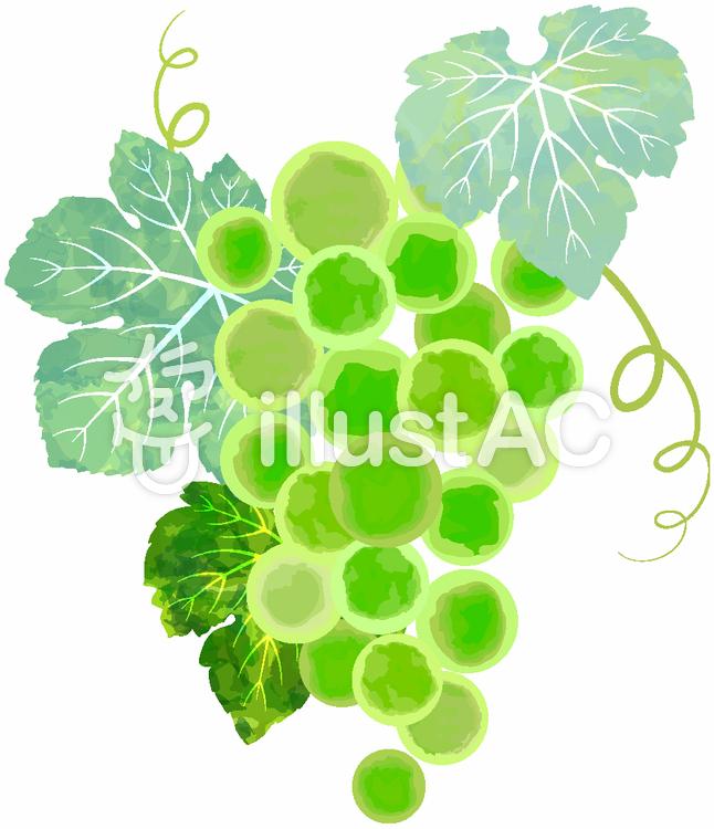 ブドウ単品イラスト02のイラスト