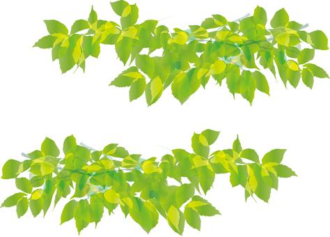 Leaf Green Frame Frame Border Frame New Green Wakaba Spring