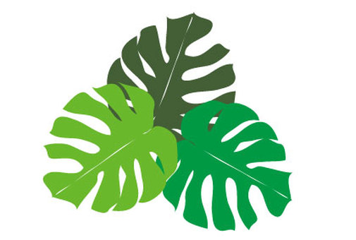 Monstera foliage plant tropical green leaf