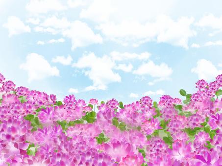 蓮華草 꽃밭