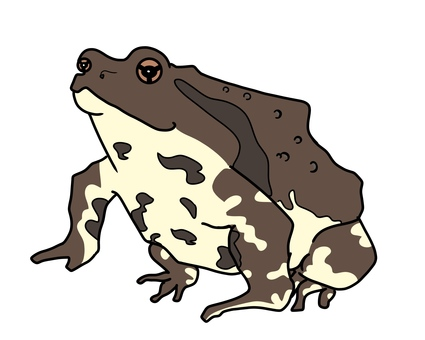 Illustration of a simple toad
