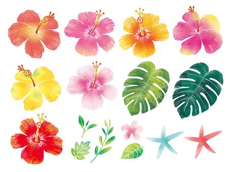 Hibiscus watercolor set
