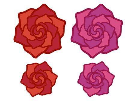 Rose red pink