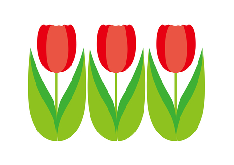 Three tulips - red