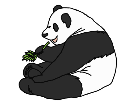 Panda to eat bamboo grass