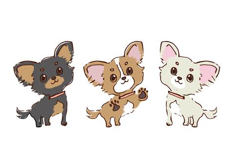 Three dog Chihuahuas